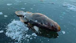 Наконец то дождались Вышли на первый лед 2020 2021 Рыбалка по первому льду