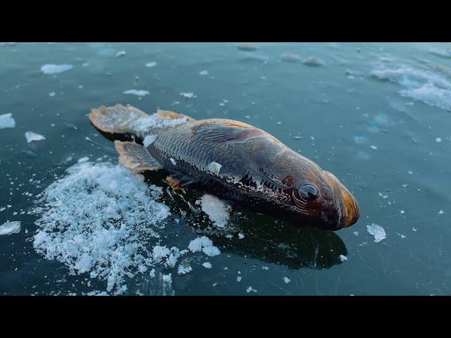 Наконец-то дождались!!! Вышли на первый лед 2020-2021! Рыбалка по первому льду.
