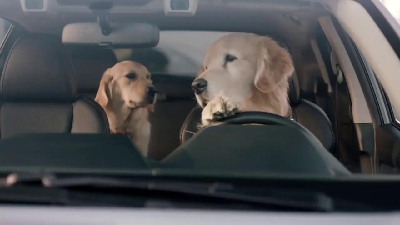 2018 Super Bowl Subaru Dog Tested I Subaru Commercial I
