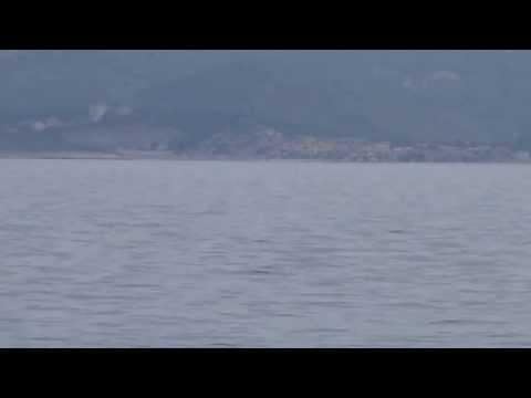 Delfiny Pisak Chorwacja 2013