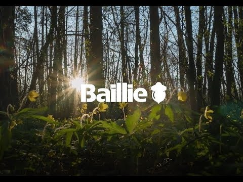 Baillie Lumber Company Overview