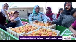 الأخبار - محصول المشمش ... المصدر الرئيسي للدخل فى قرية العمار القليوبية