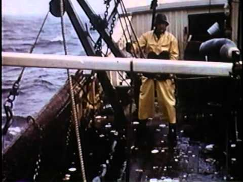 Scallop Fishing on the Ursula M Norton - 1951