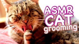 ASMR Cat - Grooming #15