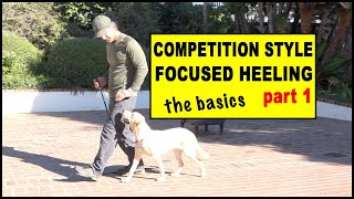 Competition Focused Heeling part 1 foundation - Dog Training Video