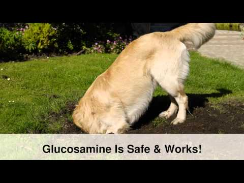Glucosamine For Dogs Joint Pain - Dog Arthritis Pain Relief