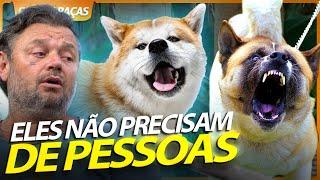 AKITA INU E CHOW CHOW, OS CACHORROS QUE NÃO PRECISAM DE PESSOAS! | RICHARD RASMUSSEN