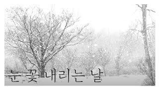 수목원 겨울 나무 사이로 눈이 꽃잎처럼 흩날립니다