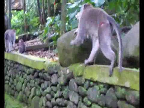 Cat Kidnapped by a Monkey