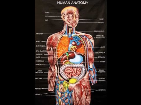 Human Anatomy Picture And Course Review - YouTube