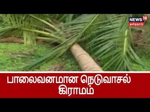 கஜா புயலால் பாலைவனமான நெடுவாசல் கிராமம் ..மக்களின் நேரடி குரல்    Cyclone Gaja Damages in Neduvalsal
