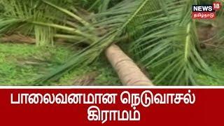 கஜா புயலால் பாலைவனமான நெடுவாசல் கிராமம் ..மக்களின் நேரடி குரல்  | Cyclone Gaja Damages in Neduvalsal