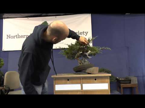 Peter Warren Bonsai Workshop Sept 2013 - Ian's Juniper