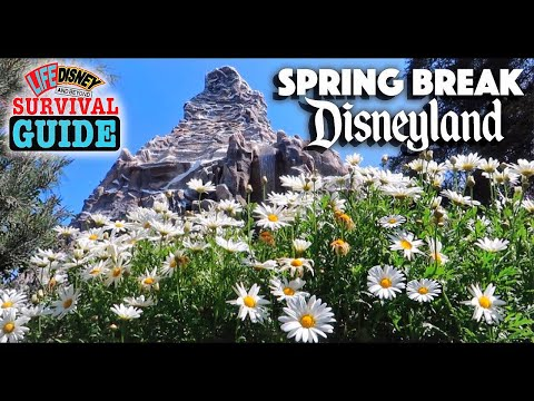 Spring Season At Disneyland! | Survival Guide Tips & Tricks + How To Plan Your Visit!