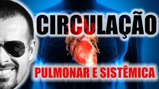 As sistema do cardiovascular são estruturas quais