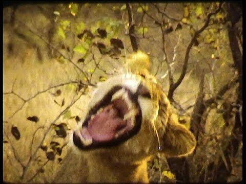 South Africa Kruger Park 1980