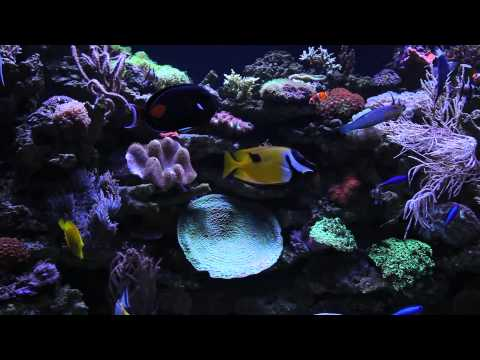 Luxury Saltwater Aquarium, Chelsea, London