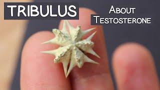 Tribulus Terrestris Review, Does It Increase Testosterone?