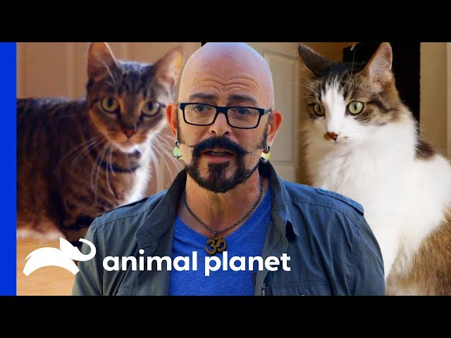 Jackson Galaxy Helps Cat Rivalry Come to an End | My Cat From Hell