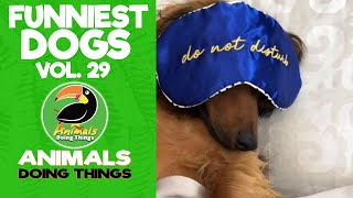 🐶  Funny Dogs Vol. 29 | Animals Doing Things