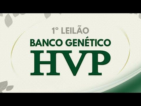 Lote 39 (Hia FIV - HVP 3672 / Harmoniosa FIV - HVP 3482)