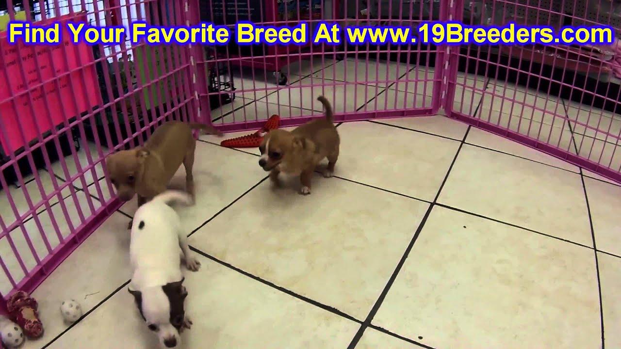 Puppies In Grand Island Ne
