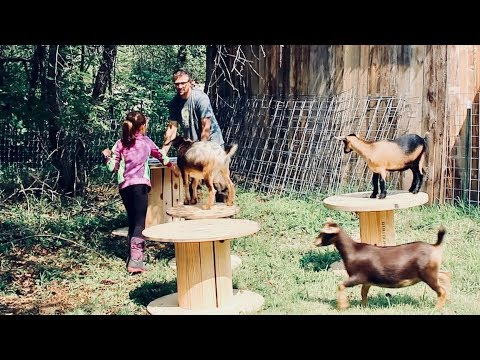 Building Goat Paradise (for our Nigerian Dwarf Goats  with wooden Spools)