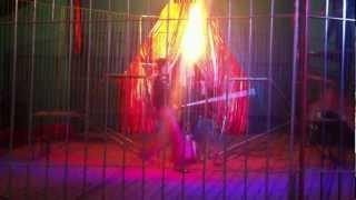Tigre de Sumatra en el circo Empalme Escobedo