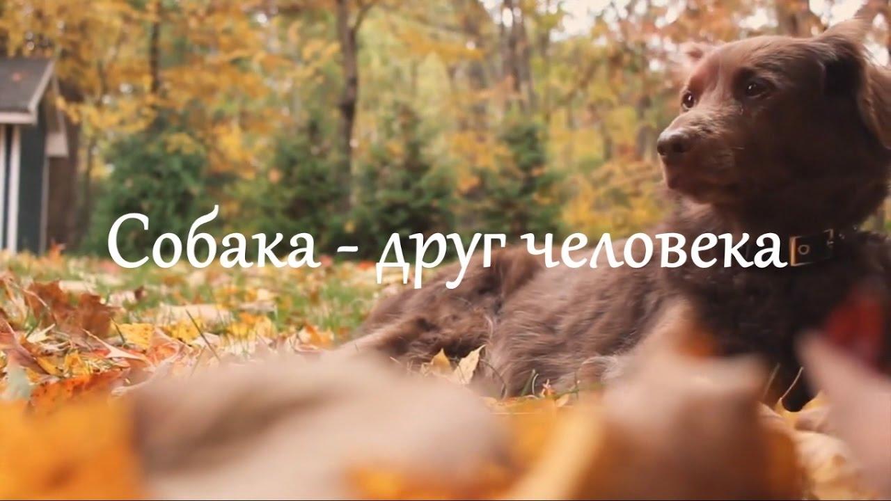Собака друг человека с надписью на картинке