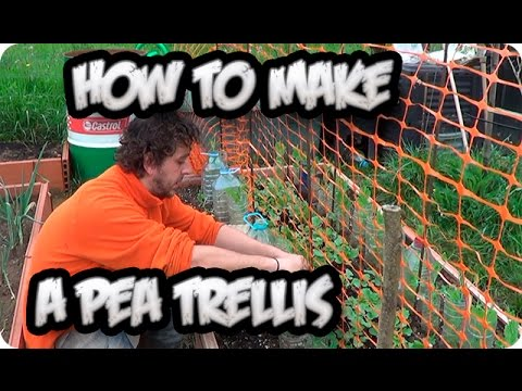 How To Make A Pea Trellis For Climbing And Growth