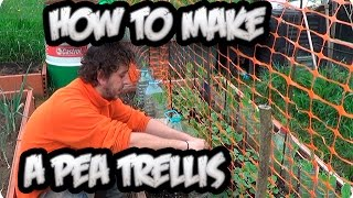 How To Make A Pea Trellis For Climbing And Growth || Organic || Toni's Organic Vegetable Garden