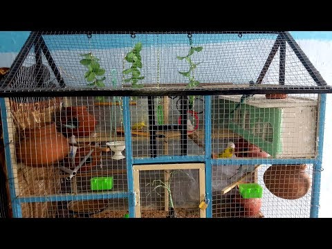 BIRDS CAGE DESIGN   Love Birds House_Nest_Home   Birds Planet