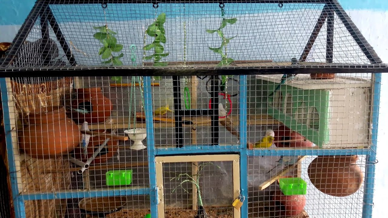 730a51697 BIRDS CAGE DESIGN | Love Birds House_Nest_Home | Birds Planet - YouTube