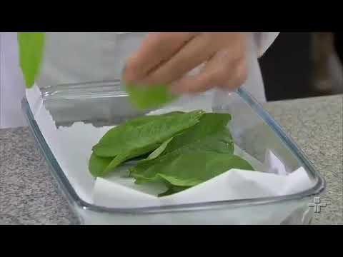 Cicatrizantes: folhas de goiaba e pitanga