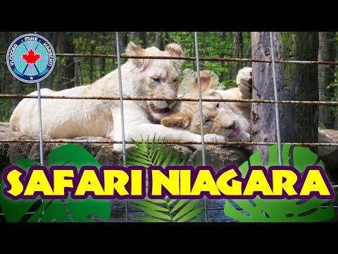 SAFARI NIAGARA With The Family! | Niagara Falls, Ontario, Canada