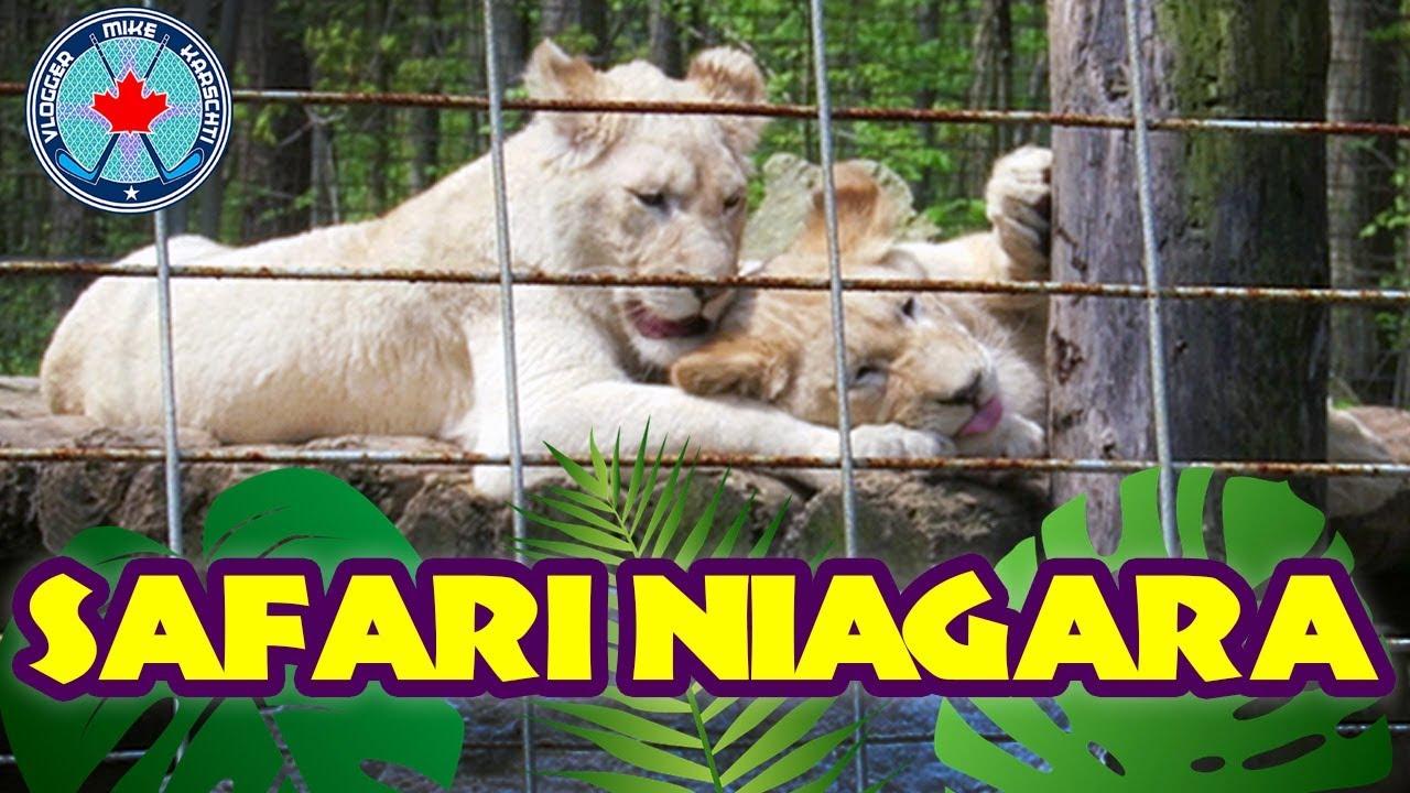SAFARI NIAGARA with The Family! | Niagara Falls, Ontario, Canada ...