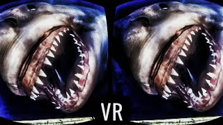 🔴 [VR VIDEOS 3D] Shark Underwater in Virtual Reality for VR BOX 3D SBS 1080p