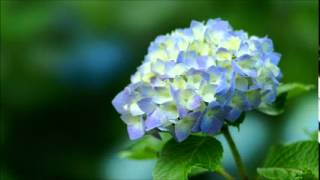 武蔵坊弁慶(宮田幸季) - 紫陽花の残夢で逢いましょう