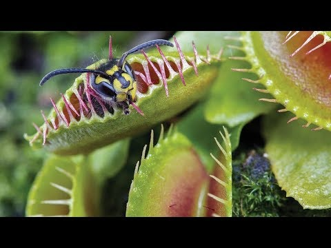 9 Carnivorous Plants You'll Want to Stay Away From