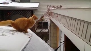 Funny cute cat Failing at Jumping Compilation