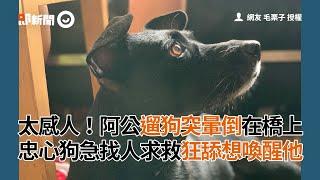 太感人阿公遛狗突在橋上暈倒 忠心狗急找人求救狂舔想喚醒他│寵物│狗狗