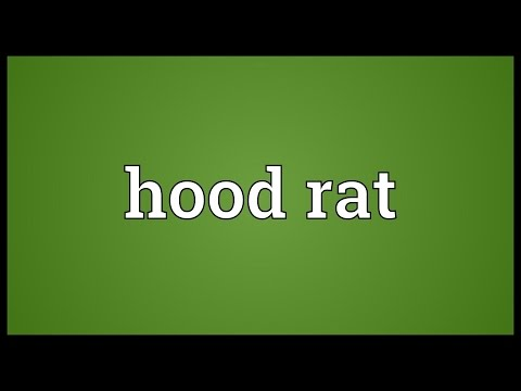 Hood rat Meaning