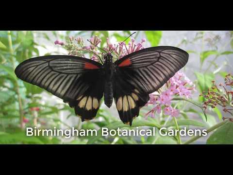 Birmingham, United Kingdom - Travel
