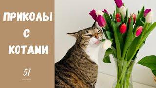 Смешные КОТЫ КОТИКИ КОТЯТА Приколы с животными 51