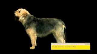 Man Made Dogs Morph 4