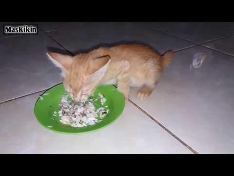 Inilah Efek samping setelah kucing diberi obat cacing