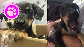 Cute puppy´s reaction after being adopted