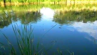 Рыбалка на Амура 15 кг