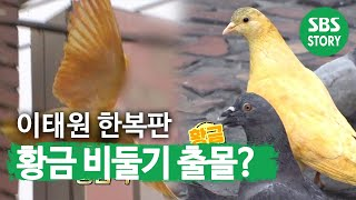 '황금 비둘기?' 서울 이태원 한복판에 출몰!ㅣ순간포착…