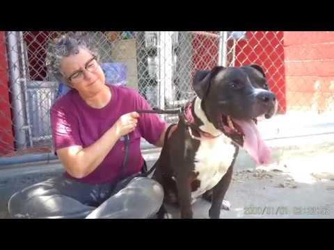 California Boxer Rescue - ADOPTIONS - Rescue Me!